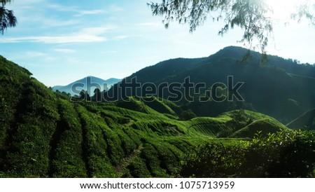 Cameron Tea hill 3 #1075713959