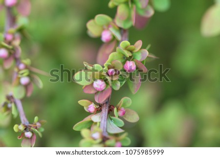 Amazing macro view on little leaves on blossoming buds. Spring time. #1075985999