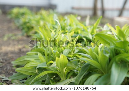 Moscow Russia April 24, 2018 - the first sprouts of green plants in the spring #1076148764