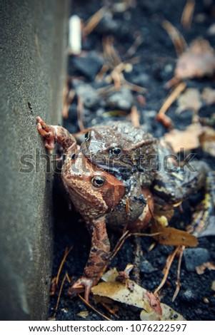 frogs. pair skating.  #1076222597