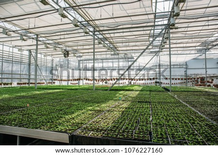 Organic hydroponic ornamental plants cultivation nursery farm. Large modern hothouse or greenhouse or glasshouse, farming growing seedings production #1076227160