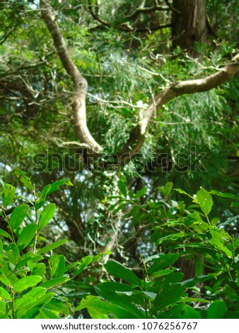 Loving Detail of Nature in a Forest in the Serra de Sintra, Lisbon, Portugal #1076256767