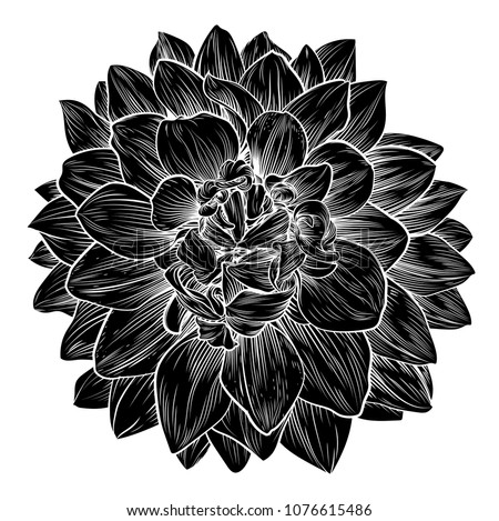 A single chrysanthemum or dahlia woodcut flower in a vintage retro engraved etching style