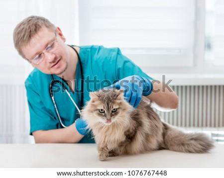 Veterinarian making regular check up of a cat at veterinary office #1076767448