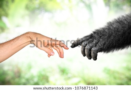 Human and fake monkey hand evolution from primates concept #1076871143