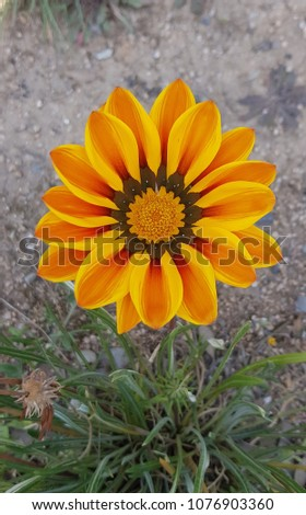 yellow flower in grass #1076903360