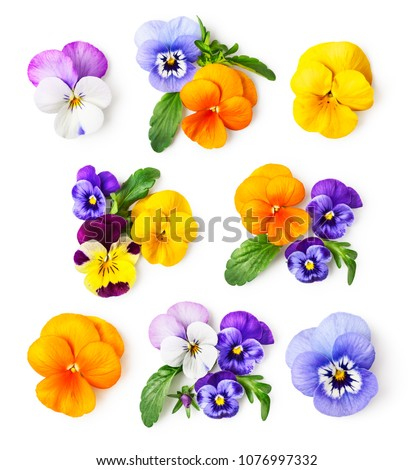 Pansy flowers or spring garden viola tricolor collection isolated on white background. Flower arrangement and floral design. Top view, flat lay