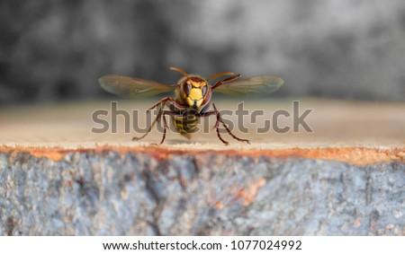 Yellowjacket Wasp Hornet