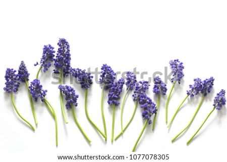 blue flowers on a white background. flat lay, top view, concept layout #1077078305