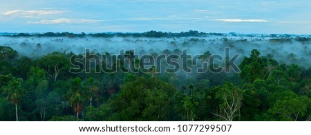 Sunrise in the rainforest. Amazon forest. Royalty-Free Stock Photo #1077299507