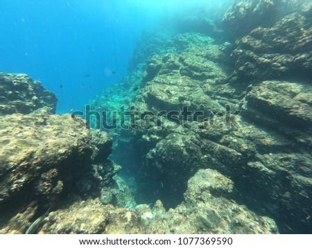 Coral exploration dive #1077369590