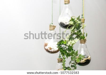 Mini garden in glass plant terrarium #1077532583