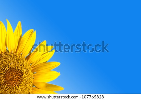 Close-up of sunflower against a blue background #107765828