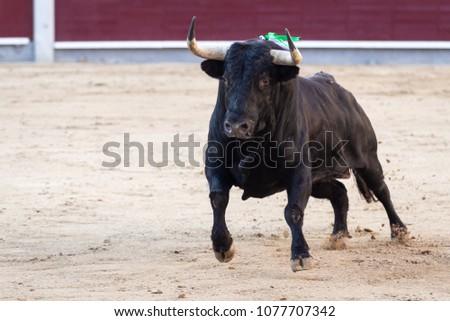 Fighting bull running #1077707342