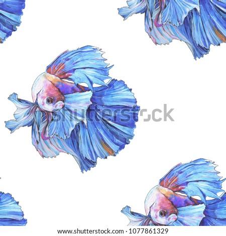 Siamese Fighting  Fish watercolor illustration pattern