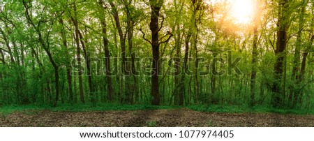 Sunset in forest #1077974405