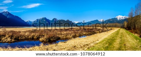 Panorama of the snow covered Golden Ears Mountain and Edge Peak from the dyke of Pitt-Addington Marsh in the Fraser Valley near Maple Ridge, British Columbia, Canada on a clear winter day #1078064912