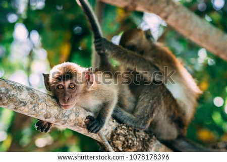 Mother and baby monkey playing in a tree in Thailand, Asia #1078178396
