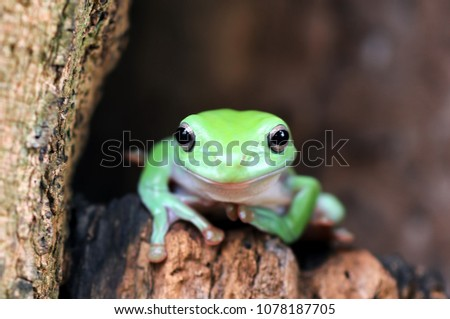 dumpy frog out of the wooden hole #1078187705