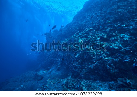 beautiful underwater world scuba drive with coral reef in the deep blue ocean with colorful fish and marine life #1078239698
