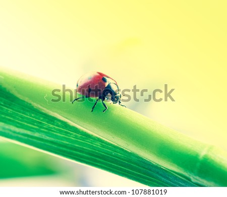 red ladybird on green leaf. #107881019