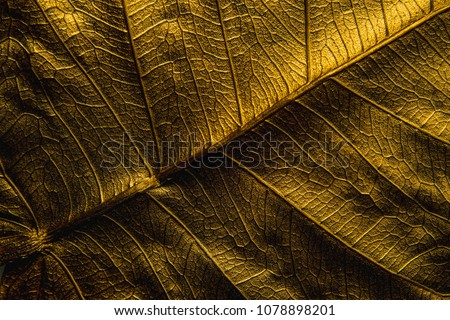 Close Up Patterns on gold leaf from Bodhi tree Isolated, planted in Thai temples. (also known as bo leave). concept of luxury to decorate. Gold-plated leaves deluxe natural design. #1078898201