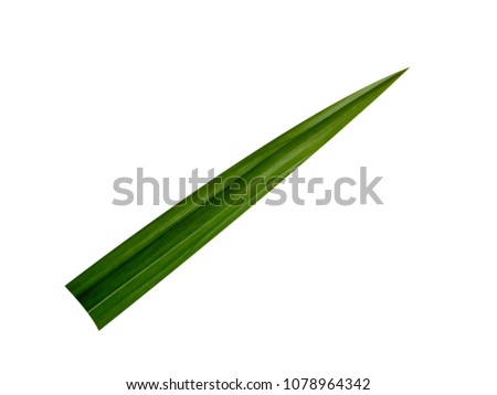 Pandan leaves on a white background. #1078964342