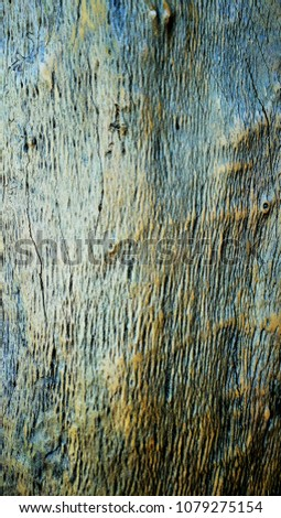 Natural texture of old hard wood #1079275154