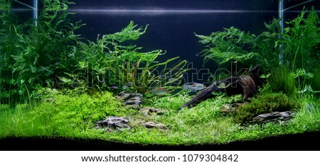 Beautiful aquatic plants tank, selective focus.