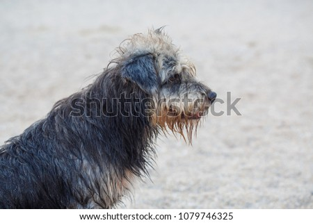 Stray dog on the beach #1079746325