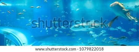 The whale shark aquarium