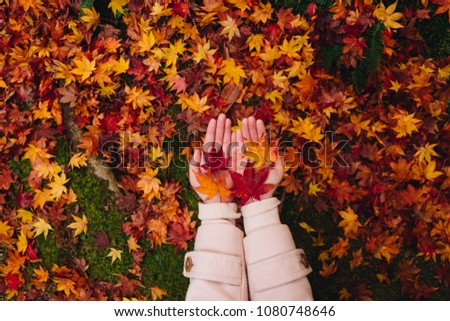 two hand of a Asian girl holding carefully a red maple leaf over the moss background and the autumn leaves on the floor, Autumn season in enkoji temple, kyoto, japan #1080748646