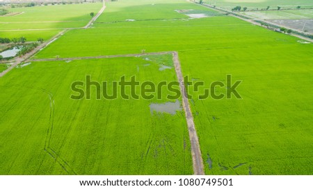 Aerial  view from flying drone of  Field rice  with landscape green pattern nature background / top view field rice  #1080749501