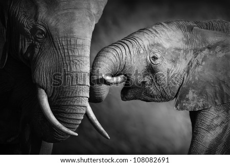 Elephants showing affection (Artistic processing)