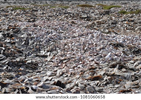 thousand of different shells on the beach of different kind #1081060658