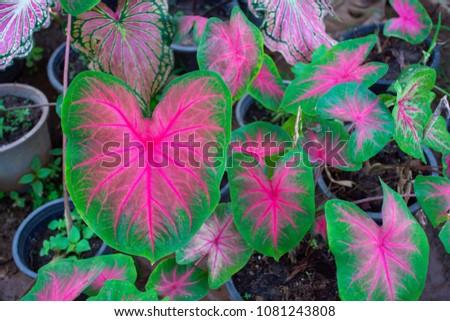 Nature leaf background. #1081243808