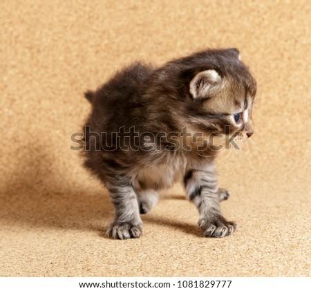 Newborn kitten. Day 22 of life. #1081829777