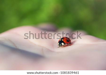 ladybug close-up on the palm #1081839461