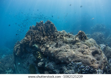 Pacific ocean floor underwater seascape with some fish and natural sunlight through water surface #1082121239