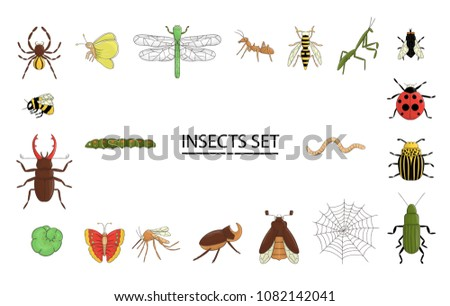 Vector set of colored insects. Collection of isolated on white background bright bee, bumble bee may-bug, fly, moth, butterfly, caterpillar, spider, ladybug, beetle, dragonfly, wasp, mosquito, ant