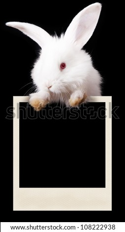Rabbit with a photograph