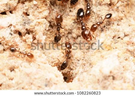 Ants inside the nest