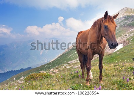 Picture of the horse that graze in the mountains of Tibet, the Himalayas.
