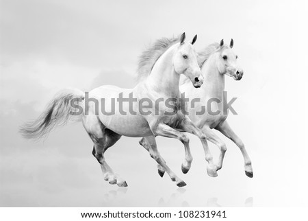 white horses #108231941