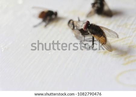 Flytrap, Fly, Fly on trap #1082790476