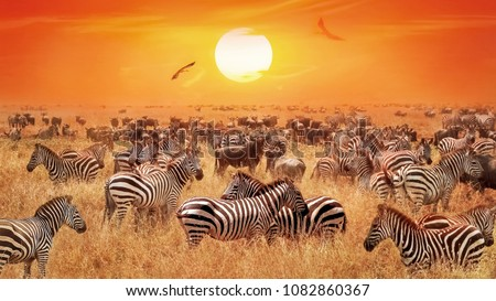 Groupe of wild zebras and antelopes in the African savanna against sunset.  Wild nature. Artistic natural african image. #1082860367