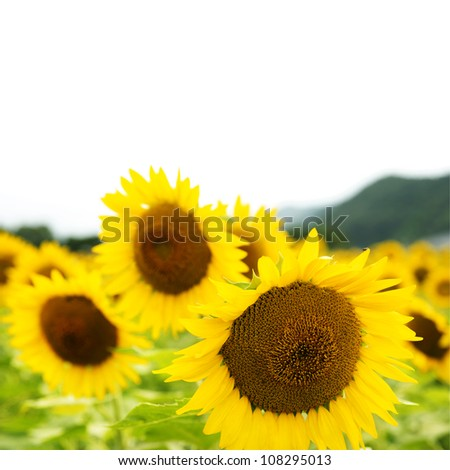 Sunflowers #108295013