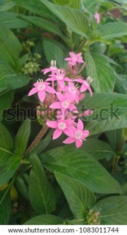 Pink beautiful flowers #1083011744