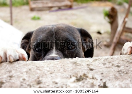 A DOG IS HIDING