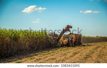 Sugar cane hasvest plantation #1083651095